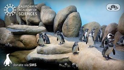 Pocket Penguins penguins