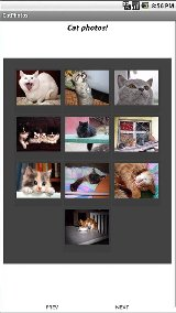 Cat Photos! codescan eprint photos