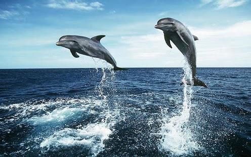 природа животные дельфины море бесплатно