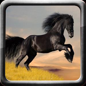 Horse bike horse