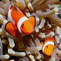 Aquarium Themes