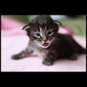 Animals : Kittens