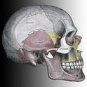 Gray's Anatomy Visual