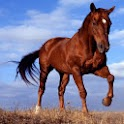 Pocket Horse - Free