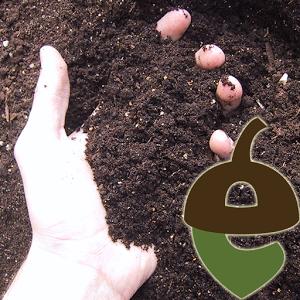 Citizen Scientist Soil