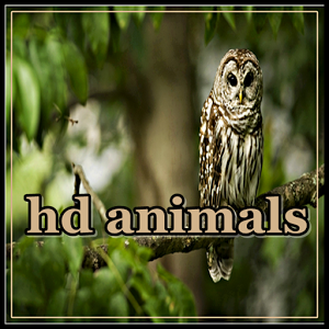 hd animals wallpaper