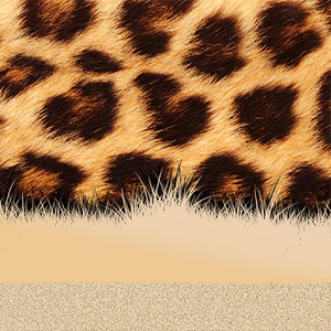 Xperia™ theme African Leopard