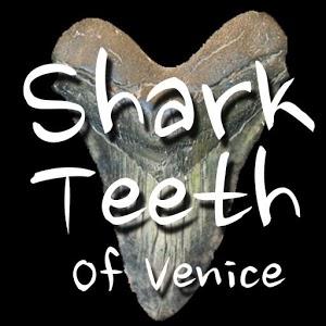 Sharks Teeth of Venice