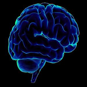 Neuro Science Quiz science quiz bee