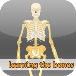 Learning the bones
