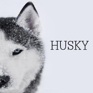 Husky Schedule Wallpaper Apps Android