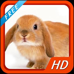 Rabbit HD Wallpapers