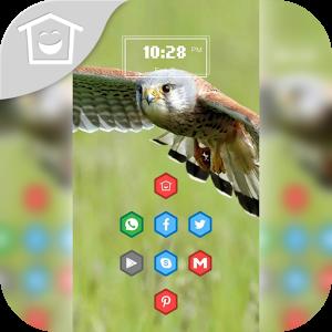 Fly owl theme