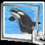 Orcinus Orca CallPhoto