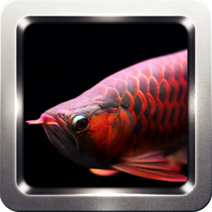Arowana Wallpapers