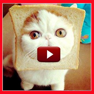 Funny Cat Videos HD