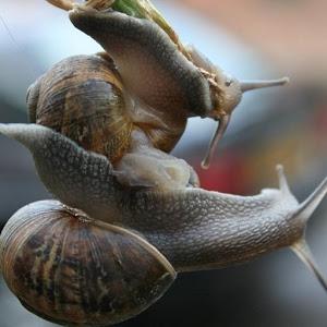 Cute Snails Wallpaper Images