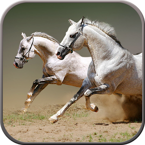 Horse Racing horse racing singing