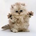 Cat Photos!