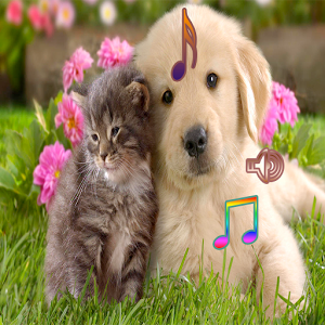 Dog and Cat Singing horse horses singing