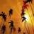 Live Wallpaper Paradise