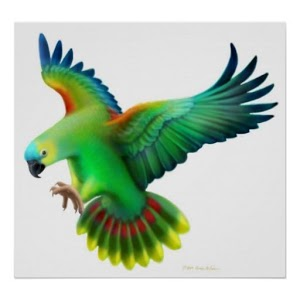 Parrot Bird HD Wallpaper