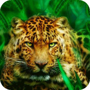 Hunting tiger LWP