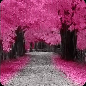 Beautiful Pink Nature beautiful brits