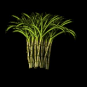 Sugarcane DSS