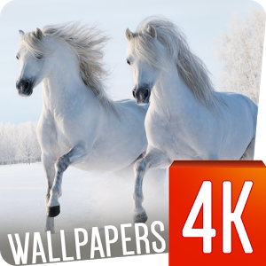 Horses Wallpapers 4K