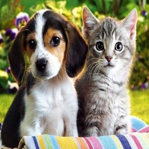 Dog cat HD widget