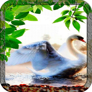Swan in Water Live Wallpaper