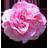 Theme:Flower Fantasy