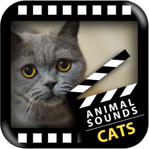 Best Cats Sounds