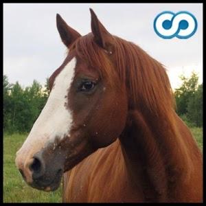 Name That Horse bike horse