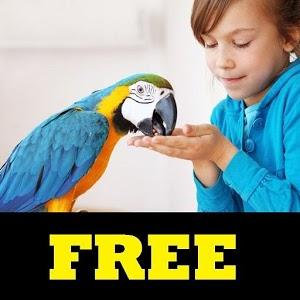 Train Your Parrot