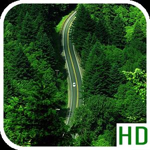 Highway Forest