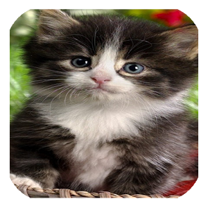 ANIMALS CUTE WALLPAPERS 2