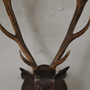 Mounted Antlers Wallpapers