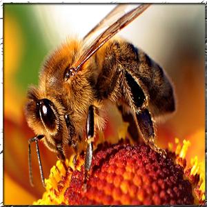 Bee Keeping forum