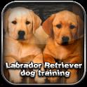 Labrador Dog Training labrador runner
