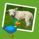 wonderful farm animals