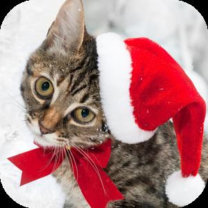 Christmas Cat Live Wallpaper