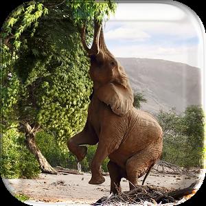 Animal Planet Live Wallpeper