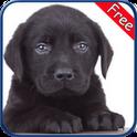 Labrador Retriever+ Free labrador runner