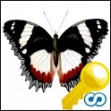Name That Butterfly Key