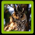Owls HD Wallpaper