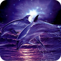 3D Dolphin and Sea