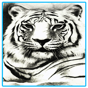 World Best Tigers WallPaper