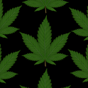 Marijuana Strains Guide